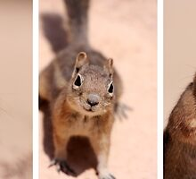 Got nuts? by Varinia   - Globalphotos