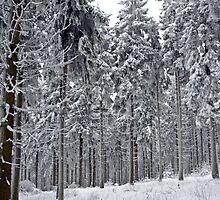 Frozen giants by heinrich