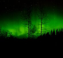 Cold Dark Green Night by peaceofthenorth