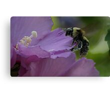 Got a Buzz On Canvas Print