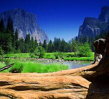 Captain of Yosemite by Kozmo