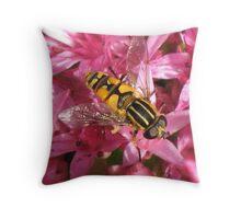 Hoverfly on Sedum Throw Pillow