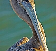 Pelican... by Julian Escardo