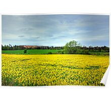 Canola and Shale Poster