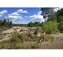 My Backyard - Along The River Photographic Print