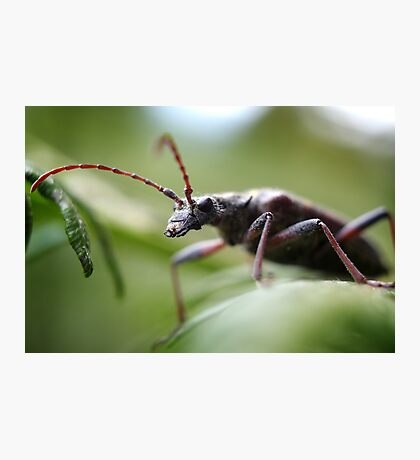 Bug Photographic Print