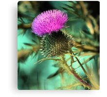 Late Light Thistle Canvas Print