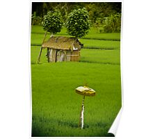 Rice Paddy - Bali, Indonesia Poster