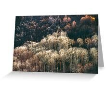 Sunlit Bare Autumn Trees (1) Greeting Card