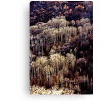 Sunlit Bare Autumn Trees (2) Canvas Print
