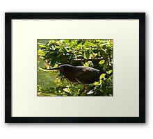 hunting bird - pájaro cazando Framed Print