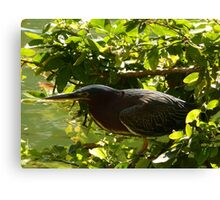 hunting bird - pájaro cazando Canvas Print