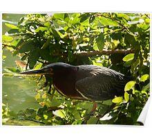 hunting bird - pájaro cazando Poster
