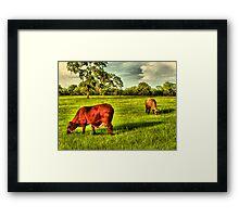 Cows At Pasture Framed Print