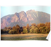 Distant Cattle Grazing Beneath Cascade Mountains Poster