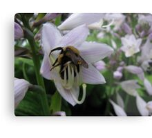 Loading Up With Pollen Metal Print