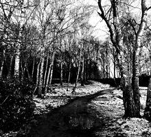 Snowy Woodland by mhphotographyuk