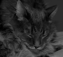 Cat Bath by Courtney Leigh