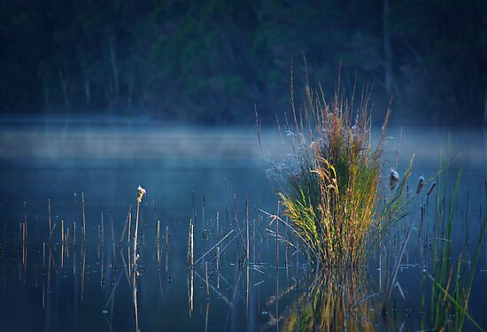Where Dreams Like Rivers Flow by Rhana Griffin