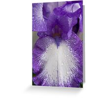 Purple & White Iris Close-up Greeting Card