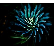 The Mermaid's Flower Photographic Print