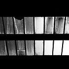 ceiling windows by craigfraizer