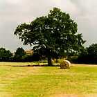 Tree and Bale by Aggpup