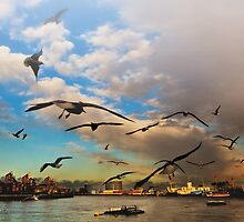 Birds of London by Mitchel Spann