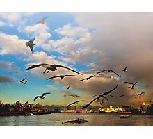 Birds of London Photographic Print