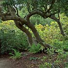 Mendocino Botanical Garden by Richard  Leon