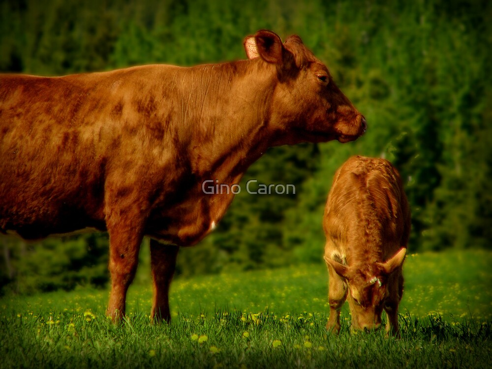 Cow and Veal by Gino Caron