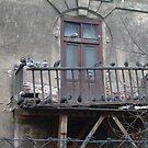 Pigeon Balcony by Thomas Clark