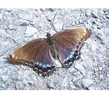 Butterfly on the Road at Ricketts Glen State Park Photographic Print