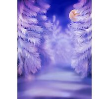 White winter forest Photographic Print