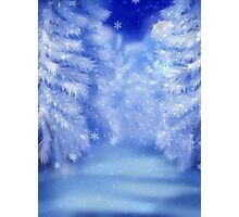 White winter forest 2 Photographic Print