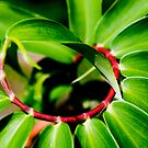 Spiral Plant by Steven  Siow