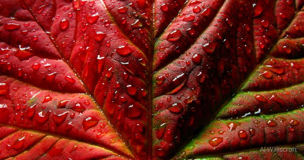 Red Leaf by Al Williscroft
