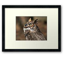 Great Horned Owl (Bubo virginianus) 20D0034757 Framed Print