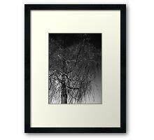 Tree against a dark English sky Framed Print