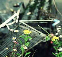 Amateur Juxtaposition Of Daisys And Trolleys In The River Shot by rorycobbe