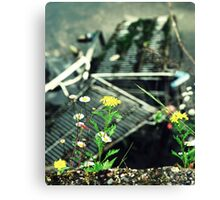 Amateur Juxtaposition Of Daisys And Trolleys In The River Shot Canvas Print