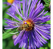 A bee on a pretty flower Photographic Print