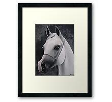 equestrian silver Framed Print