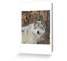 Timberwolf. Greeting Card