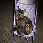 One strange cat by James Gibbs