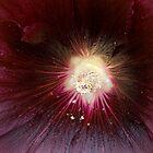 Supernova by Aimee Stewart
