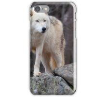 Arctic wolf on hunt  iPhone Case/Skin