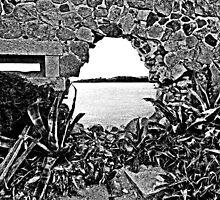 Island Caprera: break in the wall and acacia by Giuseppe Cocco
