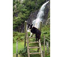 Indy at Aber Waterfalls Photographic Print
