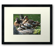 Wildlife in All Sizes Framed Print